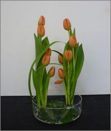 Poussée de tulipes