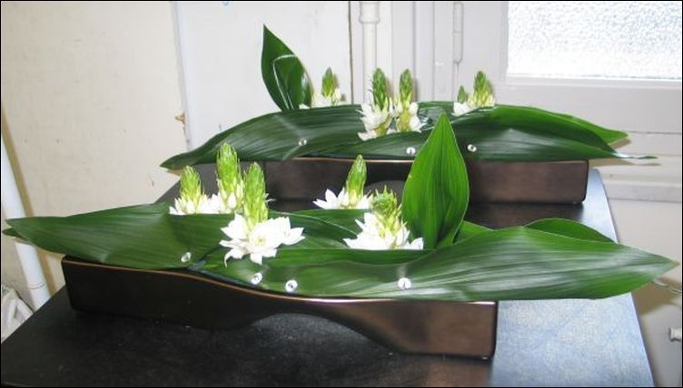 Aspidistra and Co