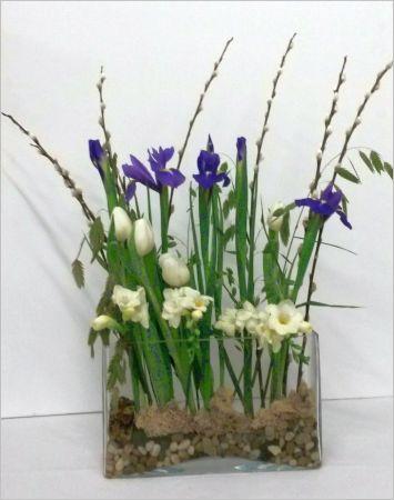 Poussée d'iris